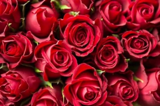 4 أفكار رومنسية للاحتفال بعيد الزواج.. بينها التخييم تحت النجوم