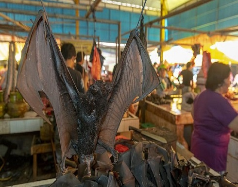 فيديو صادم لأسواق بيع الخفافيش والقرود في دول آسيوية