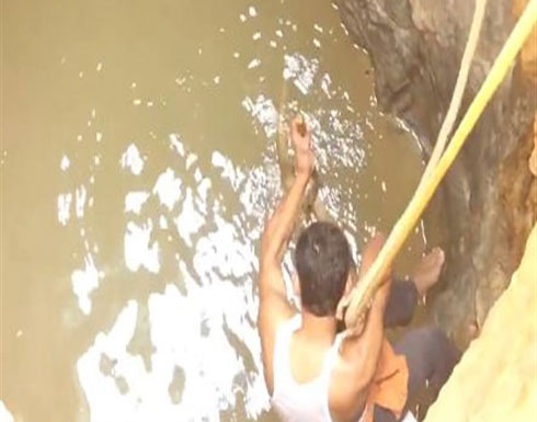 يقفز في بئر مياه لإنقاذ  افعى «الكوبرا».. فيديو