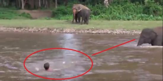 """قصة وفاء نادرة.. فيل ينقذ صاحبه من الغرق """"فيديو"""""""