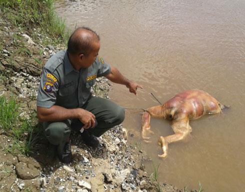 صور بشعة.. أعدموا إنسان الغاب بالرصاص وقطعوا رأسه