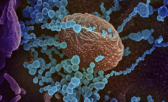 الأردن :  تسجيل ثلاث اصابات جديدة بفيروس كورونا المتحور