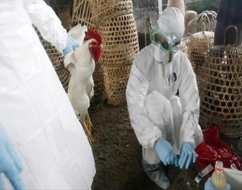 إنفلونزا الطيور.. اليابان تعدم 5.8 ملايين دجاجة منذ نوفمبر