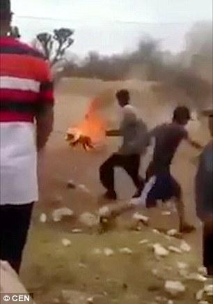 بالفيديو .. كلب يتحول لكرة لهب بعد إحراقه حيا بالمكسيك