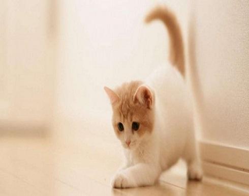 روسي قتل صديقه دفاعاً عن قطة