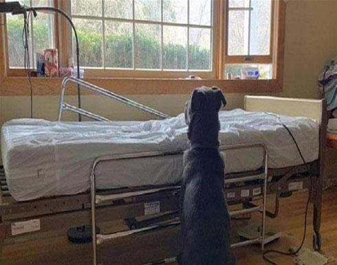كلب ينتظر صاحبة المتوفى بإصرار.. هذا ما فعله
