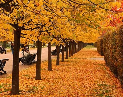 كيف يمكن التخلص من كآبة الخريف؟