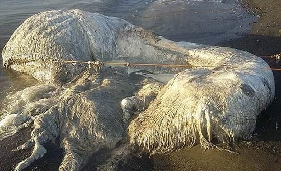 ظهور كائن ضخم ومرعب على شواطئ الفلبين.. فيديو وصور