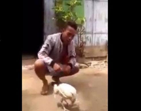شاهد : دجاجة تمتلك مهارة لاعبي الجمباز !
