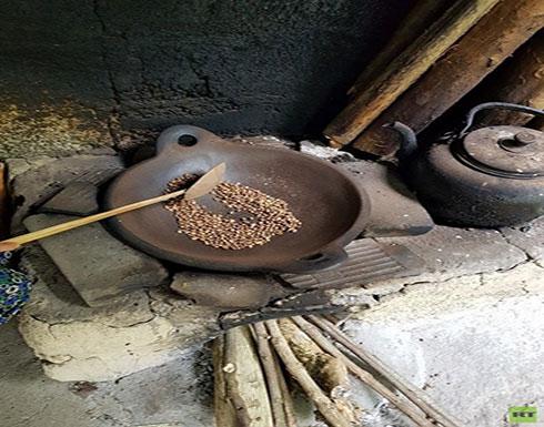 فضلات حيوان الزباد أغلى أنواع القهوة في العالم (صور)