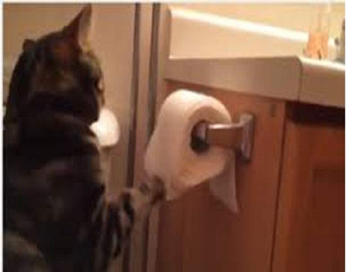 """قط يتحول إلى """"مهرب هواتف"""" في سجن شهير"""