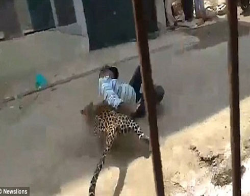 شاهد بالفيديو.. نمر ضال يتسبب في مذبحة بين سكان مدينة