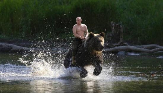 بوتين يوضح حقيقة الصورة المتداولة له وهو يمتطى دباً