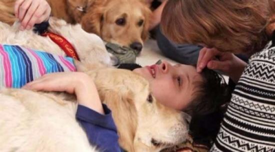 الحيوانات تساعد في علاج المصابين بالاكتئاب