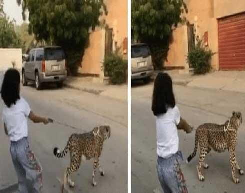 طفلة تتجول برفقة حيوان مفترس في السعودية والجهات المختصة تتدخل (فيديو)
