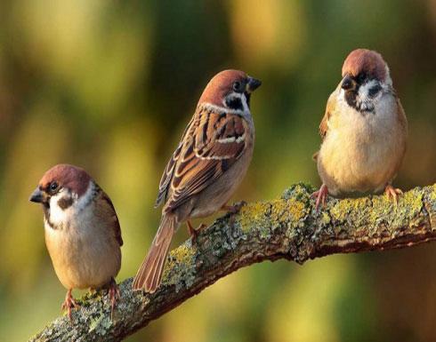 """""""هرمون الحب""""ليس فقط للبشر.. يظهر أيضا في الطيور"""