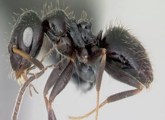 مستعمرات النمل في إثيوبيا تهدد بغزو العالم