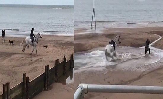 بالفيديو.. سقوط مروع لشاب من فوق حصان
