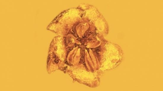 زهرة سامة عمرها أكثر من 20 مليون عام