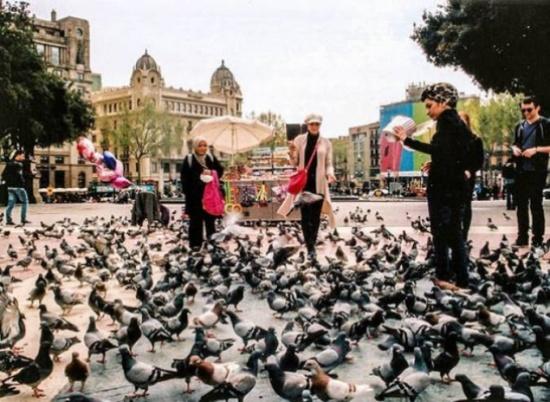حبوب منع حمل للطيور والسبب غريب