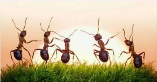 معلومات مثيرة عن النمل.. كيف يتحدث النمل وينقل معلوماته ؟