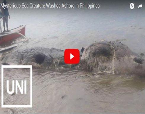 العثور على مخلوق غامض في الفلبين (فيديو)