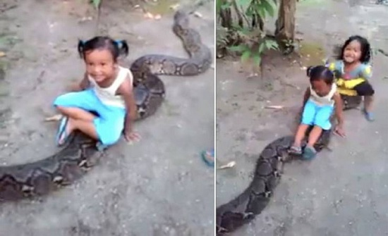 فيديو| طفلتان تركبان على ظهر أفعى عملاقة قادرة على ابتلاع انسان كامل!!