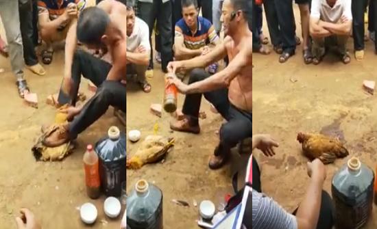 فيديو| ساحر يستخدم 'خدعة' ويدعي إعادة دجاجة للحياة بعد موتها!