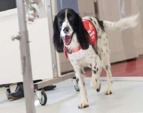 أنوف الكلاب سلاح مكافحة الملاريا المستقبلي