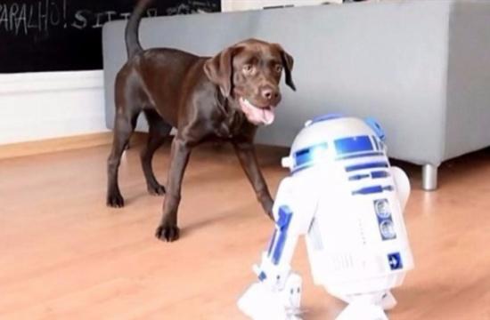 الفيديو: ماذا يحدث عندما يواجه روبوت كلباً غاضباً؟