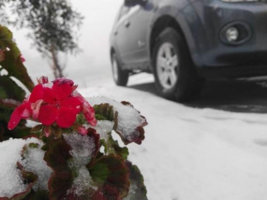 بالصور .. الثلوج تغطي عدة مناطق في جنوب الأردن
