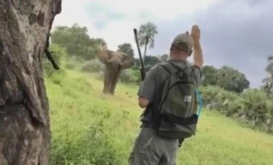 بالفيديو: أنقذَ عروسَيْن من السّحق تحت أقدام فيل!