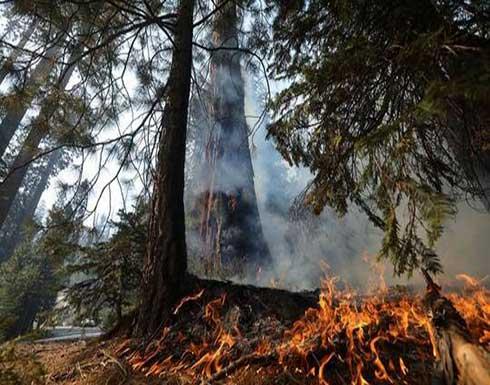 إحراز تقدم في احتواء حريق غابات بكاليفورنيا أدى لنزوح الآلاف .. بالفيديو