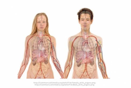 علاج انتفاخ المعدة بـ ٩ طرق طبيعية ومريحة لمعدتك