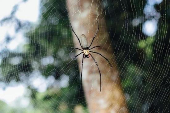 العثور على عنكبوت عمره 100 مليون سنة!