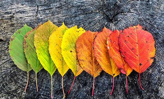 موعد بدء فصل الخريف 2021 فلكيًا
