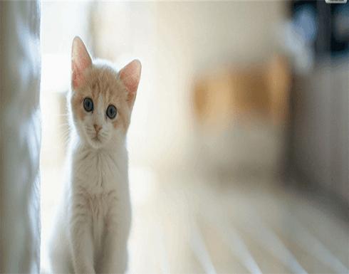 تخفض ضغط الدم وتقلل مستوى الشحوم.. فوائد مذهلة لتربية القطط