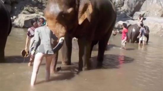 بالفيديو: فيل نطح سائحة بقوّة... إليكم ما حصل!