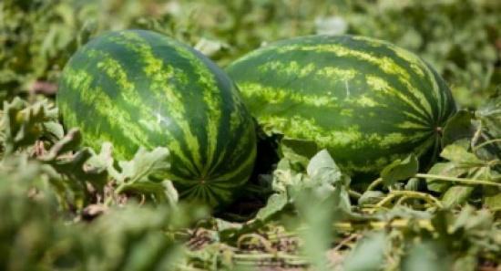 أمريكي ذهب لشراء البطيخ فحصل على 7.5 ملايين دولار