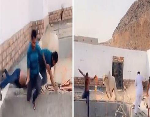 على طريقة بوحة الصباح.. شاهد انتقام ثور هائج من الجزار .. بالفيديو