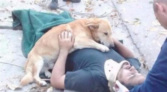كلب وفي يلازم صاحبه المصاب حتى وصول المسعفين