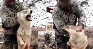 فيديو: صياد يرغم ذئباً على التقاط سيلفي قبل قتله