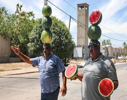 """"""" حرب البطيخ"""".. عنوان معركة على الوجود بالنسبة للفلسطينيين في منطقة الأغوار- (صور)"""