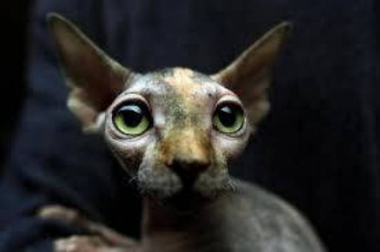 قططاً مزورة تباع بآلاف الدولارات على أنها فرعونية