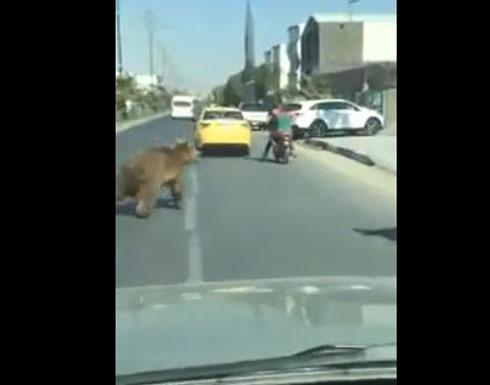 دب يصيب المواطنين بالخوف بعد تجوله في الشارع بالعراق (فيديو)