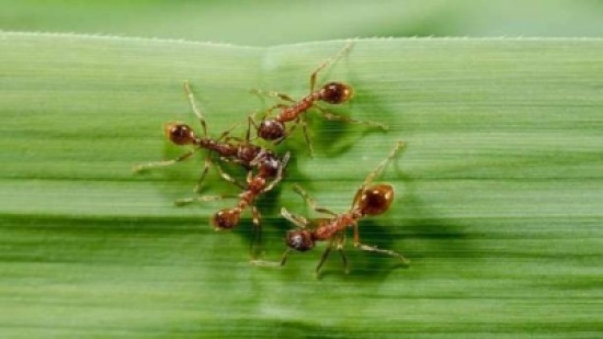 سم الحشرات يعالج مرضًا يصيب الملايي!