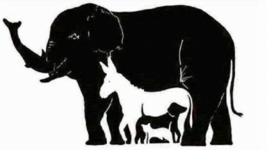 هل تستطيعون معرفة عدد الحيوانات بهذه الصورة؟